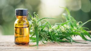 Seeking critical elements for utilizing balance cbd oil