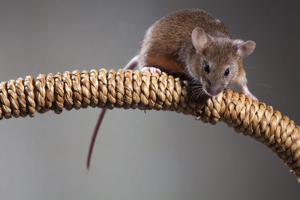 Mice Trap